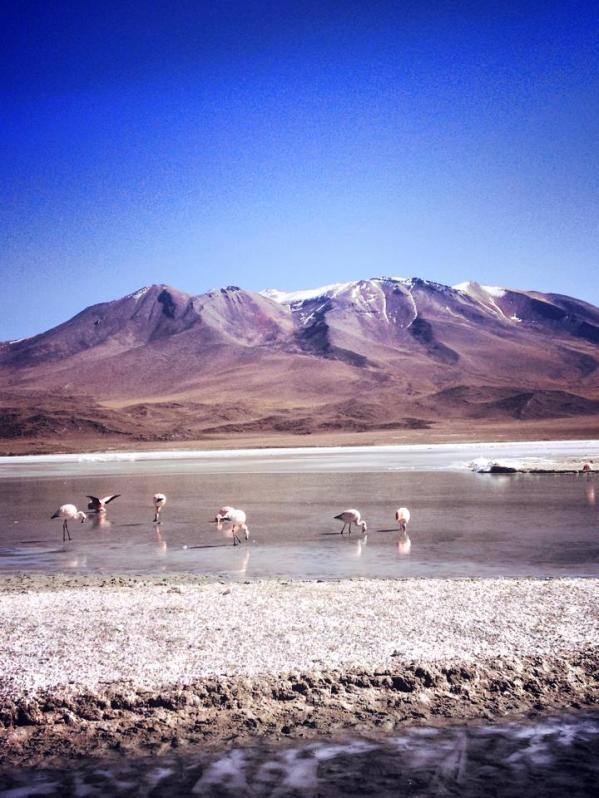 Sud de la Bolivie, tour d'Uyuni, Amérique du sud, amérique latine