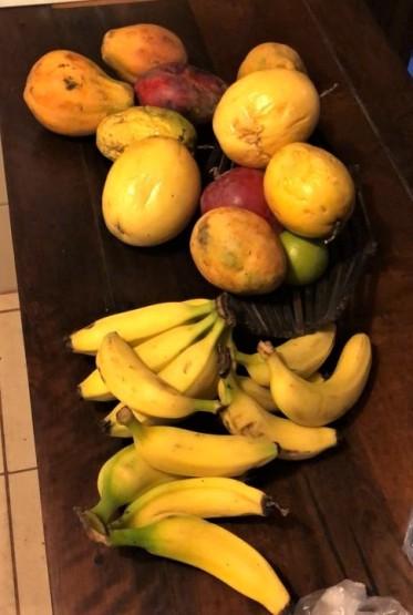 fruits tropicaux amérique latine