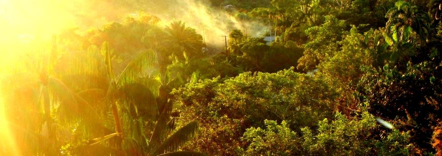 amazonie destruction amérique du sud