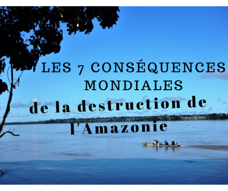 Les 7 conséquences mondiales de la destruction de l'Amazonie - Amérique du Sud