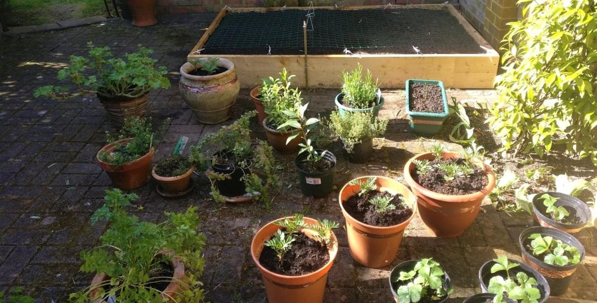 potager jardin urbain légumes fruits appartement maison