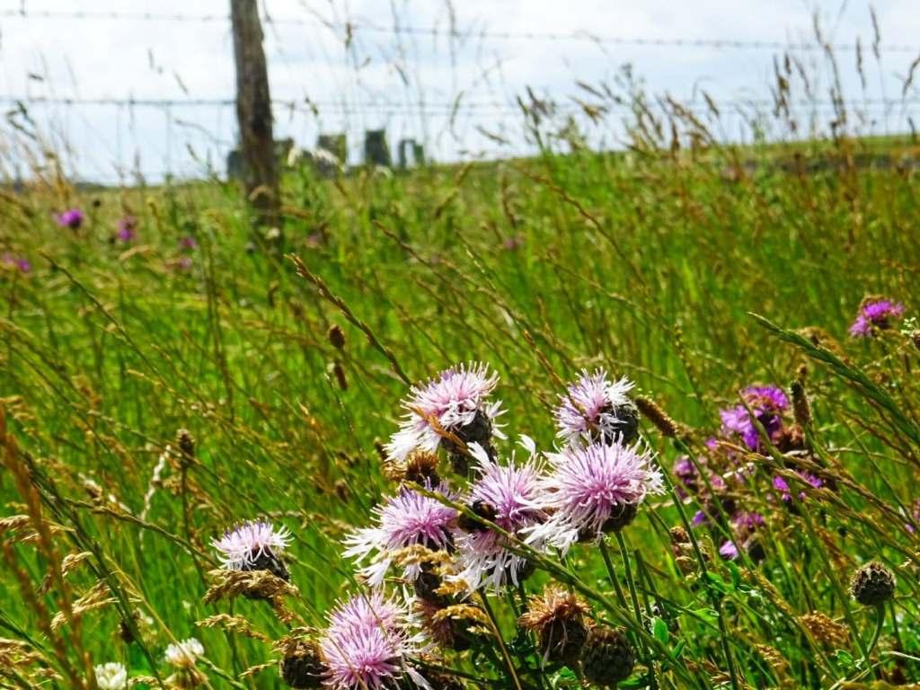 visiter stonehenge sans payer, stonehenge gratuit