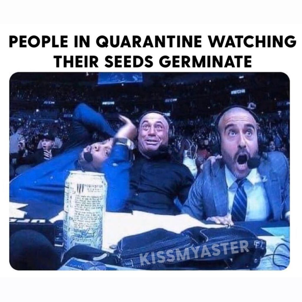 jardinage meme drôle plante jardin image