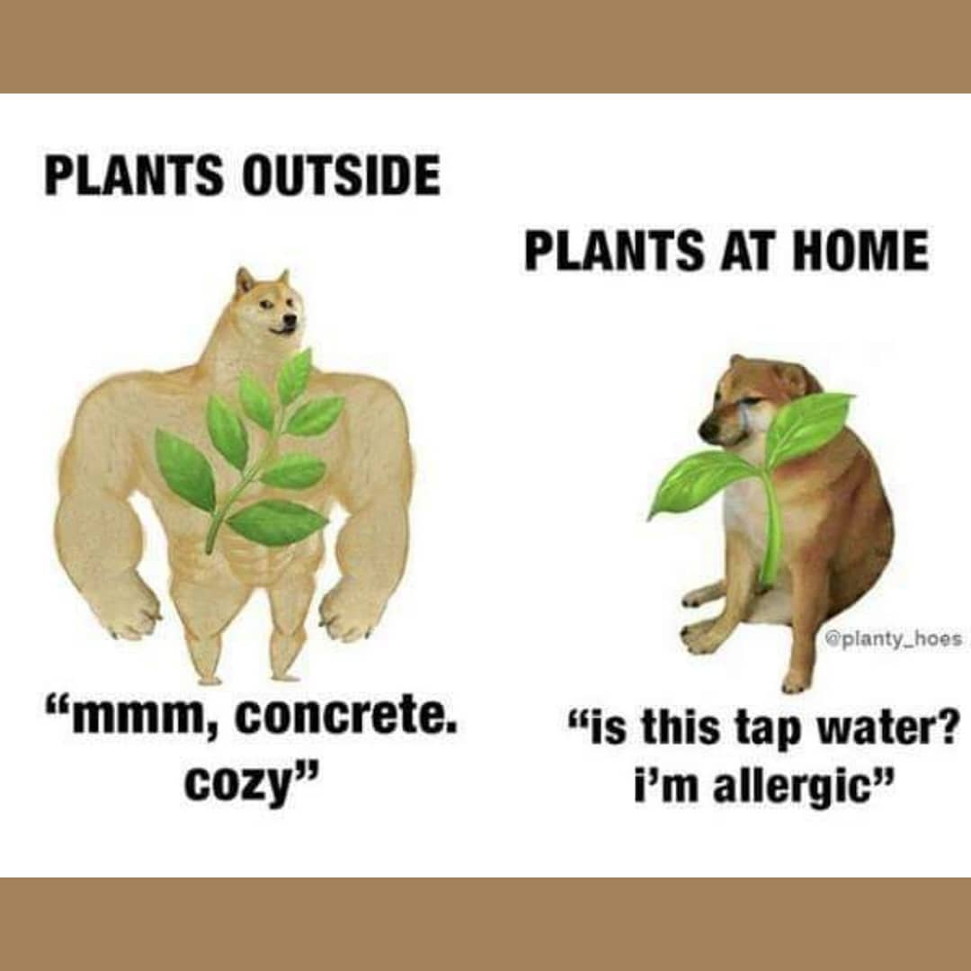 meme jardinage jardin plante drôle image