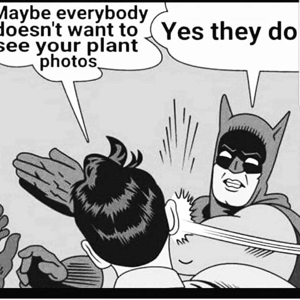 jardinage meme drôle jardin plante