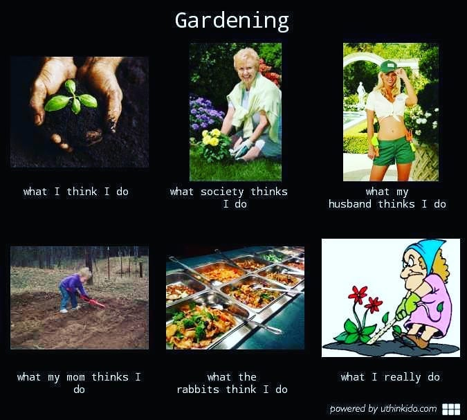meme jardinage jardin drôle plante