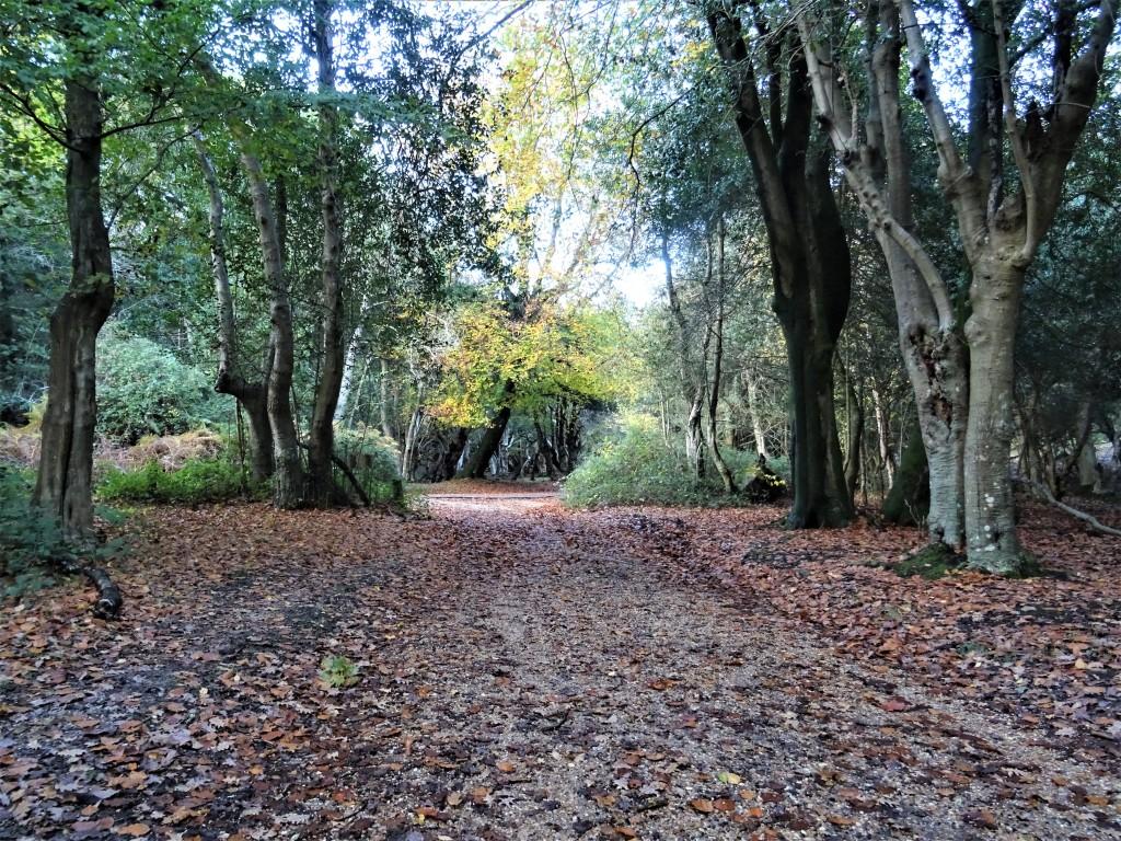 burley new forest angleterre sorcière hanté fantôme hampshire randonnée marche